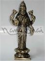 Picture of Laxmi Lotus